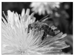 Types of pollination