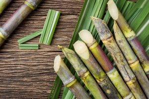 Sugarcane productivity and how it is affected by stress