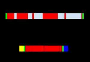 Post-transcriptional modification in RNA