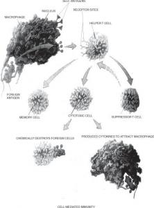 Graft-Vs-Host Disease (GVHD)