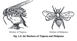 Life Cycle, Colony Organization and Division of Labour of Honey Bee
