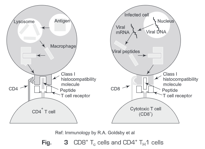 Immune Response to Infectious Diseases