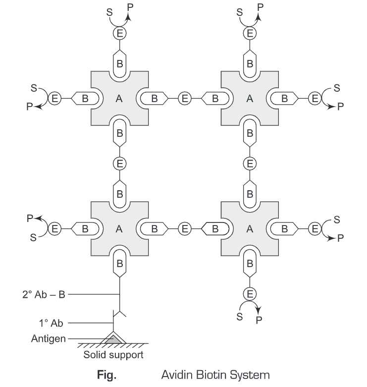 Signal Amplification System