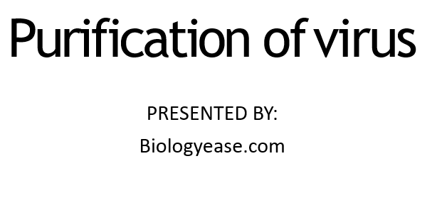 Purification of virus PPT