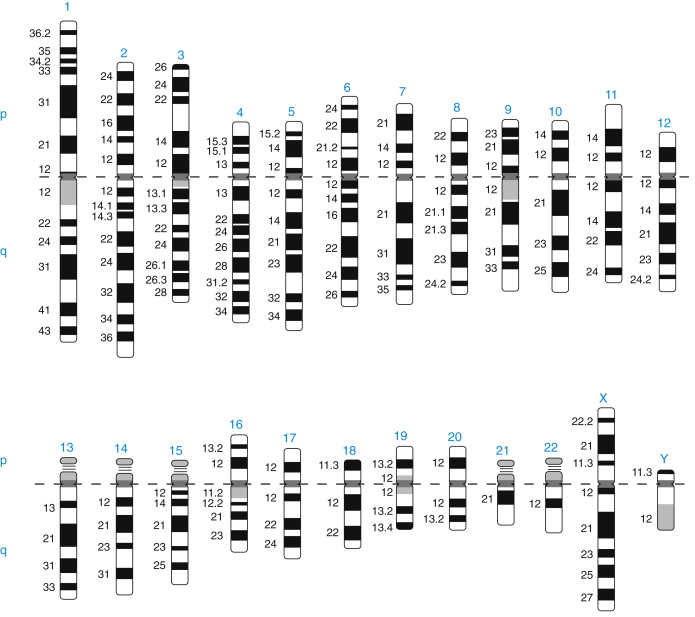 Banding Patterns in Human Chromosome