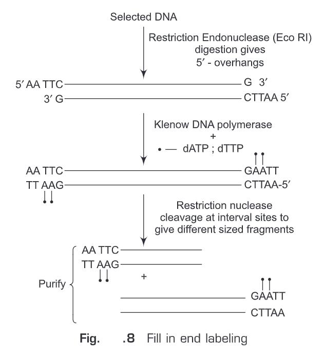 Nucleic Acid Hybridization
