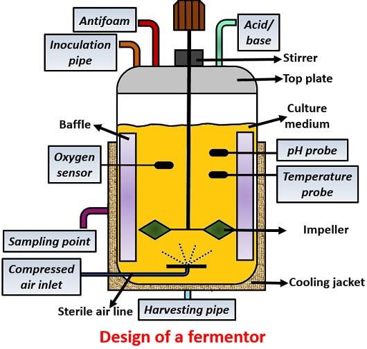 Criteria for Fermentor Designing