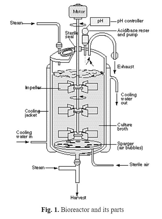 Design of a Fermentor