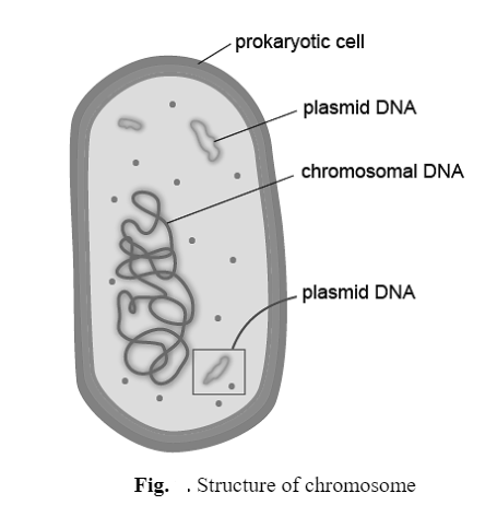 Plasmids: Types, Structure and Properties