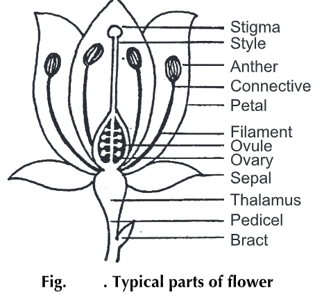 Flower Anatomy and Physiology