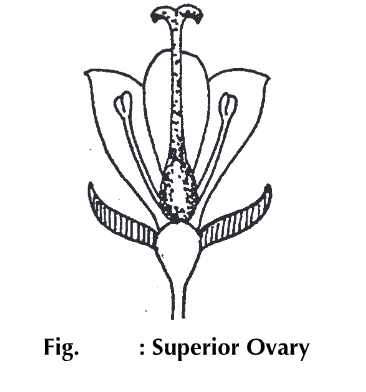 Flower: Definition Anatomy & Physiology